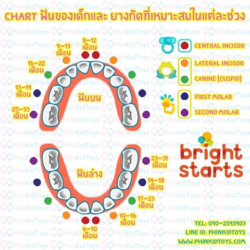 Chart-ฟัน