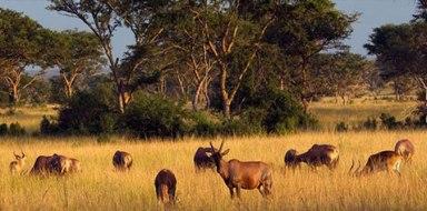 spectacular-parks-uganda-1-1