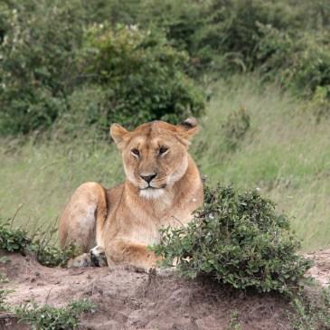 Kenya: Safaridagen