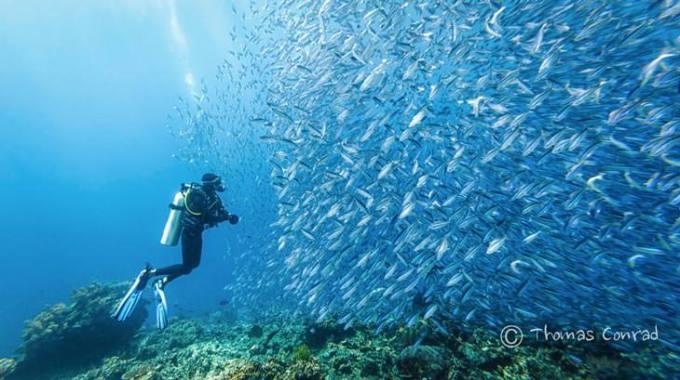 Got some fish by Thomas Conrad