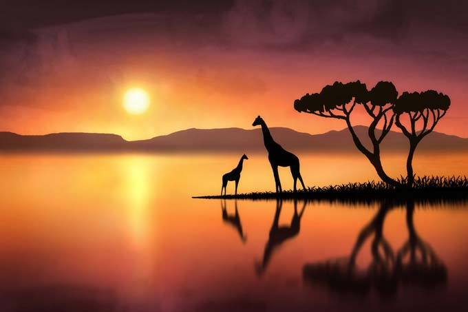 The Giraffes at Night by Jenny Woodward