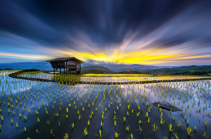 Light in Rice by sarawut Intarob
