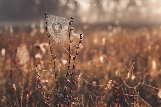 Spider Web by Elena Pronina