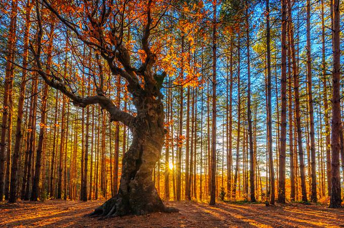 The King of the Forest by Evgeni Dinev