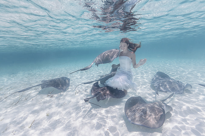 Stingrays and a Girl by Elena Kalis