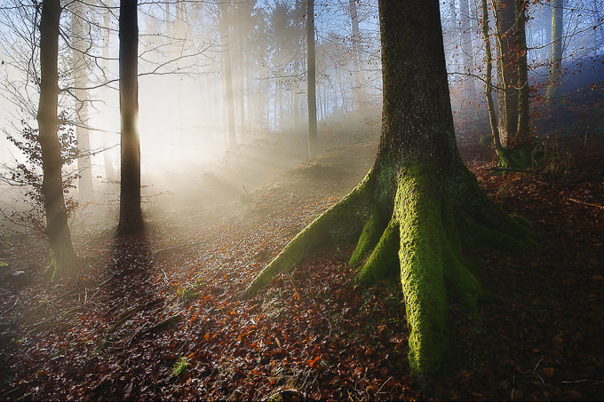 Touched by the Light by Thierry Hennet