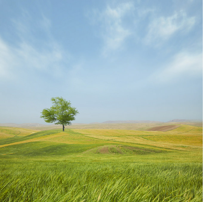 Everything-is-good-by-Hossein-Zare