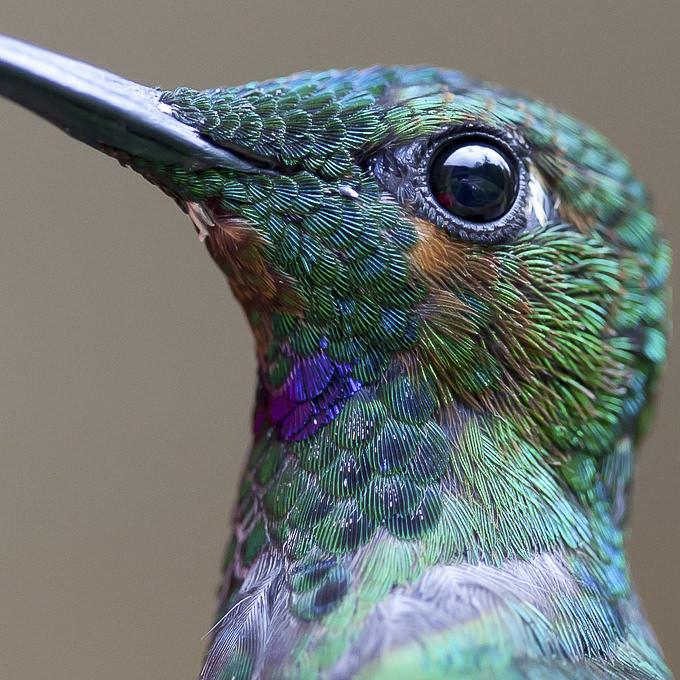 Bird Macro by Chris Morgan