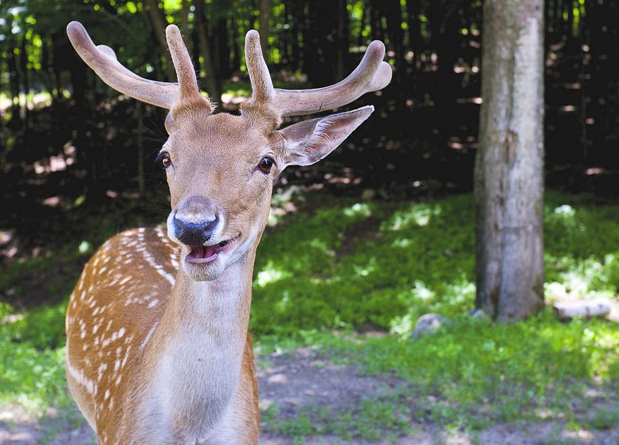 One relieved deer by Jamie McCaffrey