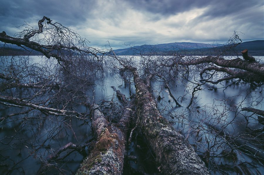 Fallen Trees by Revelation_Space