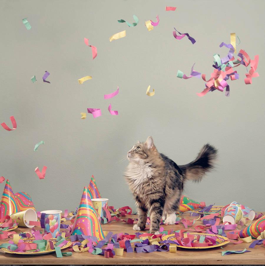 Confetti Cat by Paula
