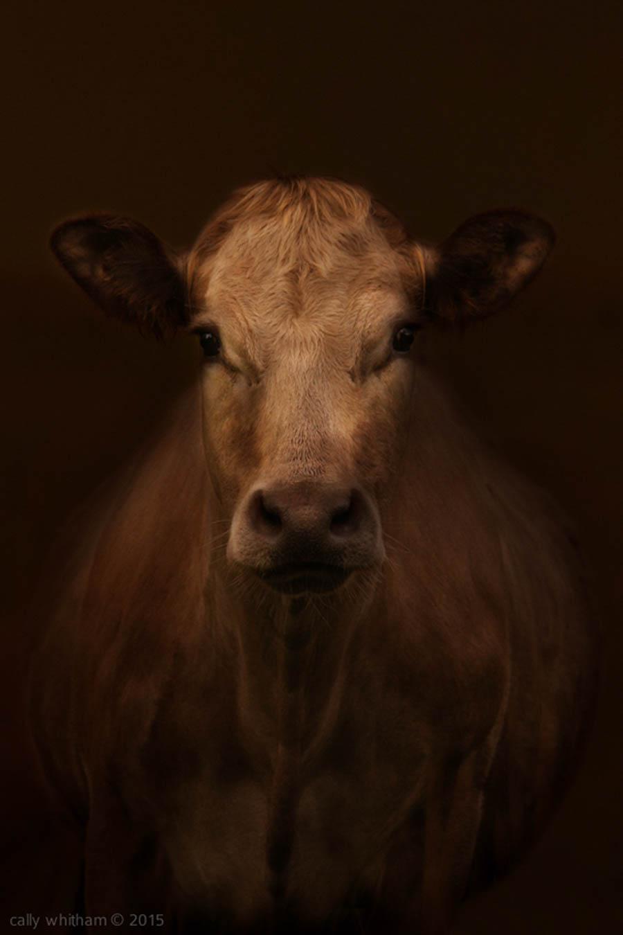 Bovine by cally whitham