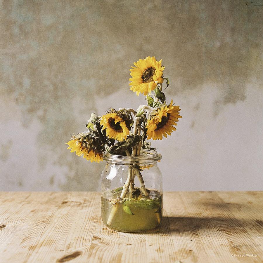 Sonnenblumen by konradku