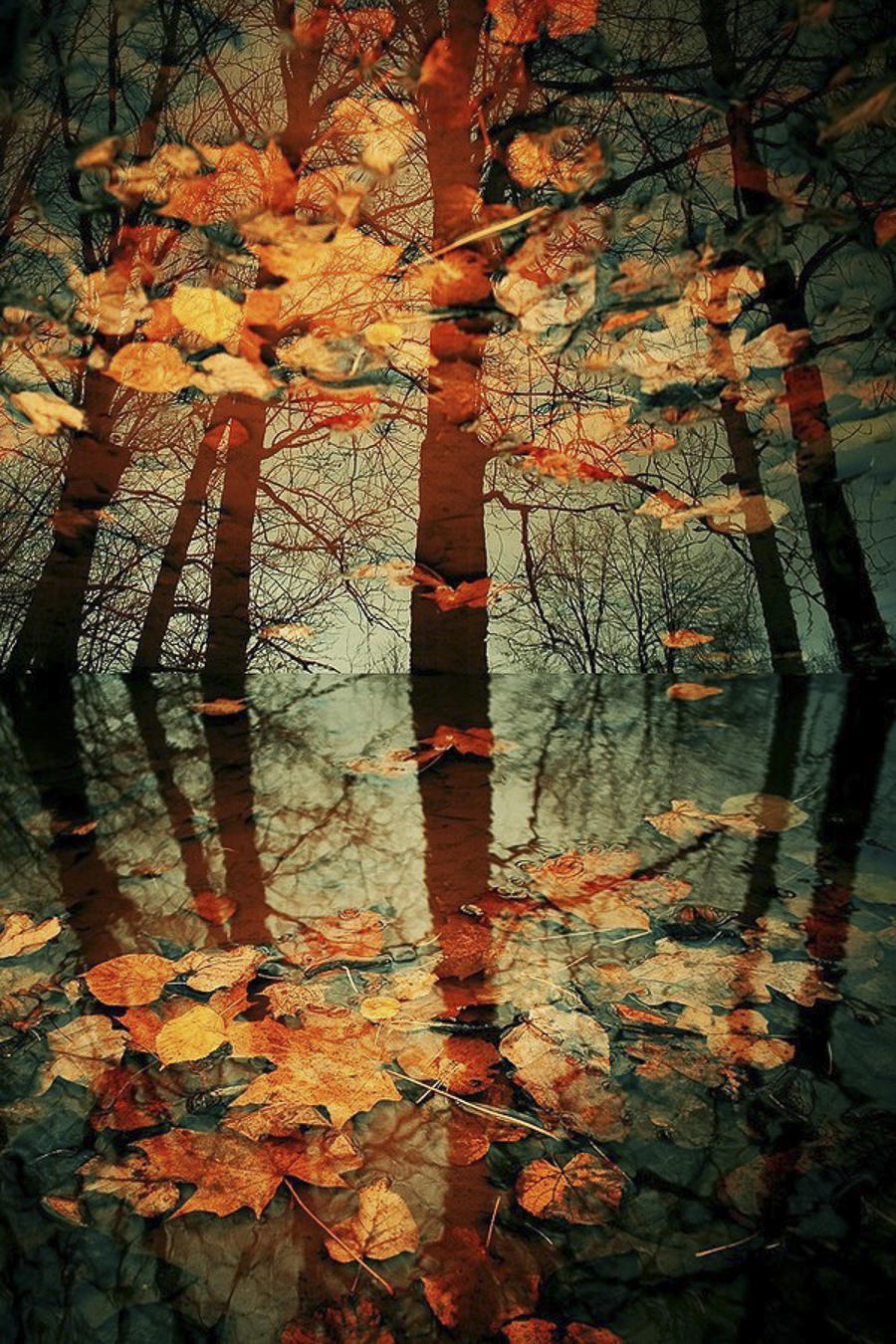 Autumn Colours by Victor Eredel