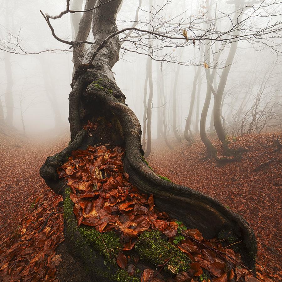 Autumn by Martin Rak