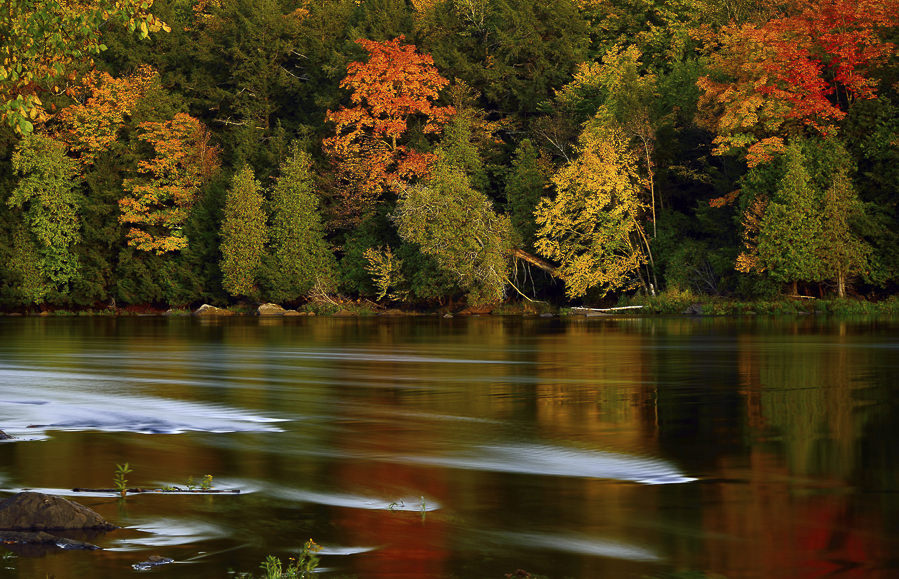 Fall Into Autumn by Saffron Blaze