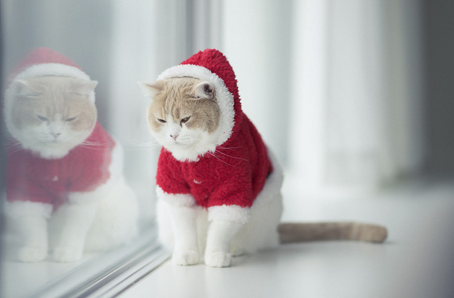 This cat hates dressing up by Ben Torode