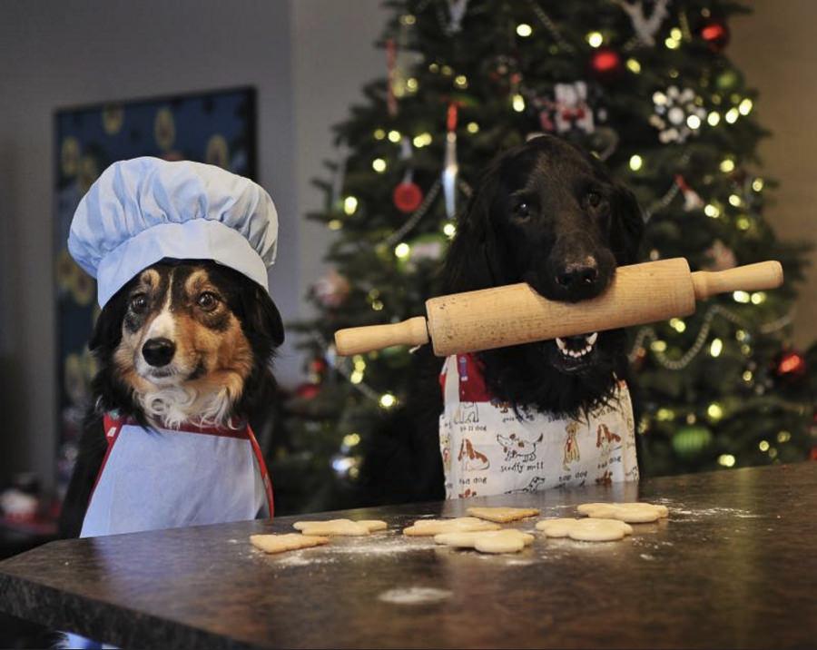 ready for santa by Sarah