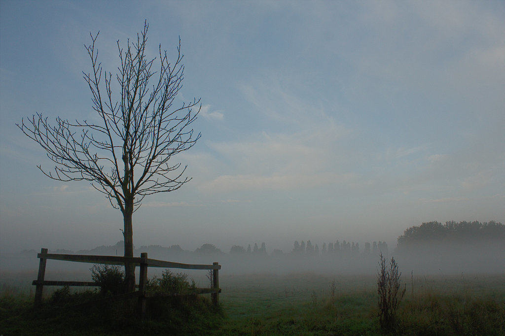 picutre of thin tree in fog