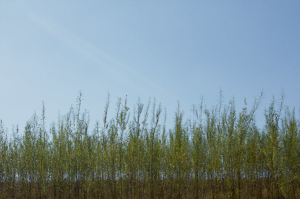 image of tall grass