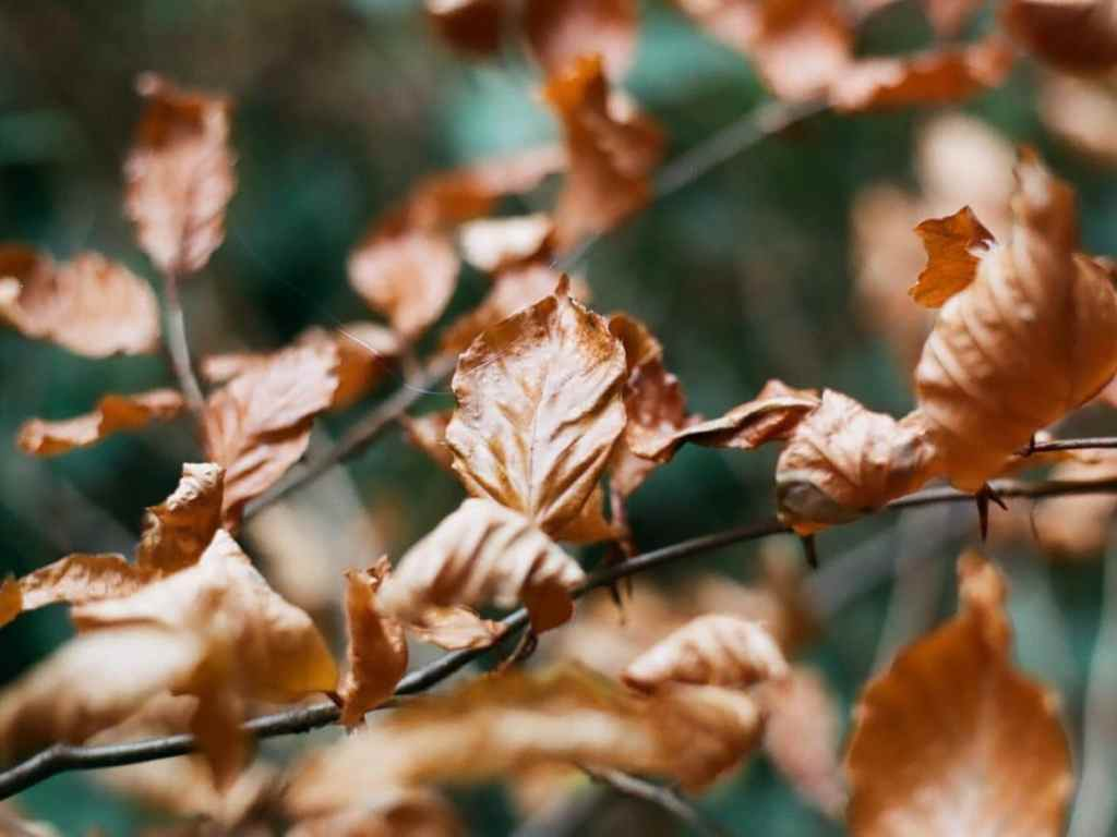 negative journey ends - Thornhill Park leaves by Peter Carcas