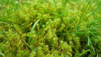 Was Hilft Gegen Moos Im Beet Phlora De
