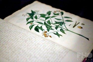 Beschrijving der Oost-Indische gewassen Circa 1710 (foto: Kim Le Cao © Pho Vietnam)