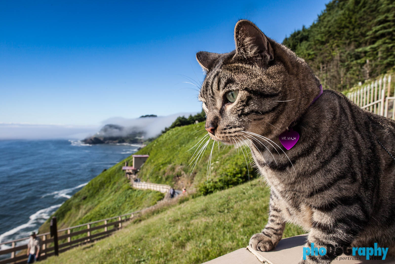 Mr Mahj Goes West Traveling With A Cat Dog Photography