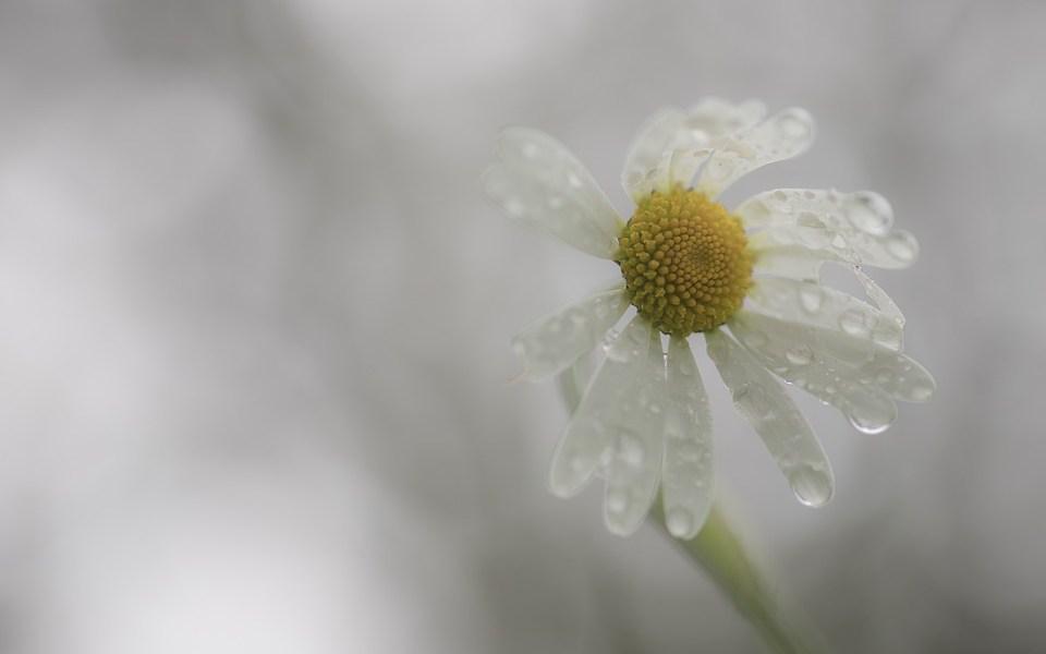 in passing poem flower