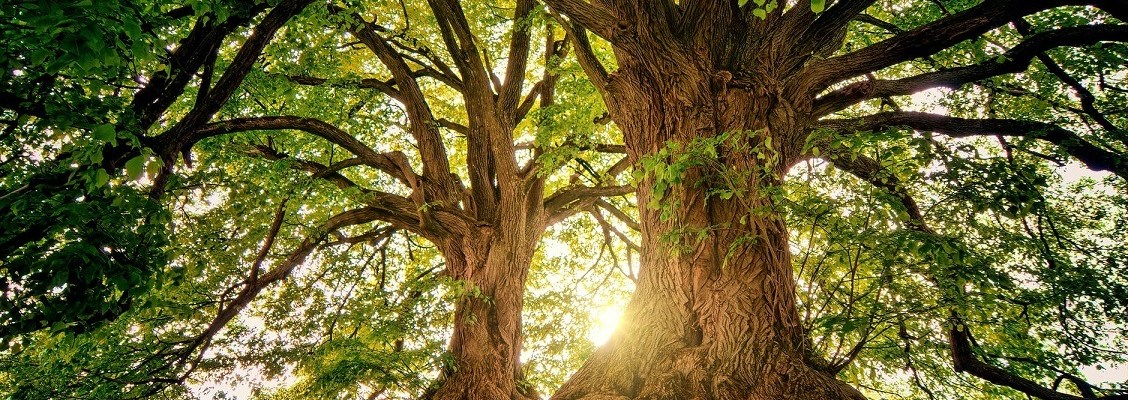 ode to the tree poem cliff eshom