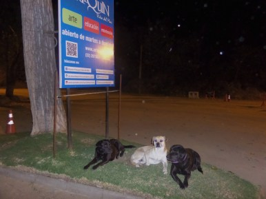 Stray dogs taking shelter in the same park as many of the locals.