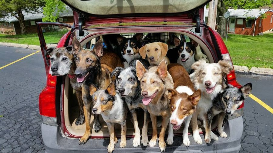 Pet odor from pets riding inside the car