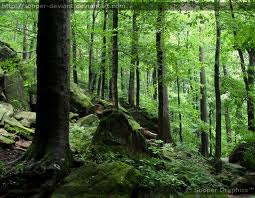 jom10-forest
