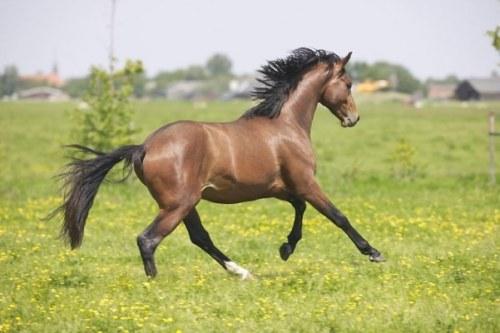 Bild Fellglanz Pferd 3