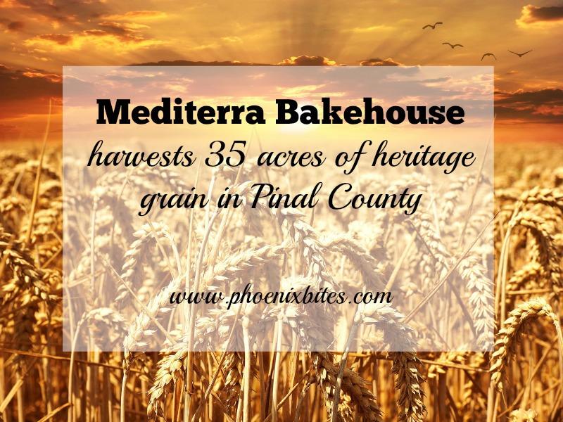 Mediterra Bakehouse harvests 35 acres of heritage grain in Pinal County