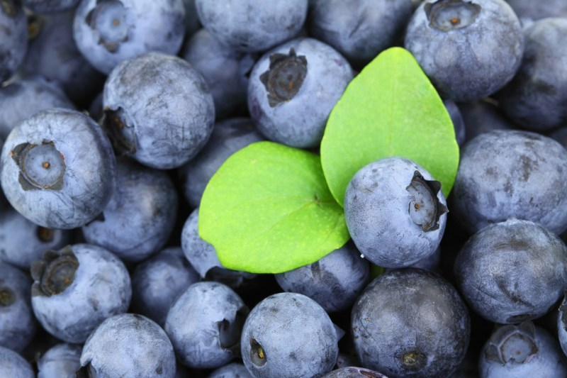 Blueberries: Foods that help to ease anxiety