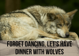 Forget Dancing, Let's Have Dinner With Wolves