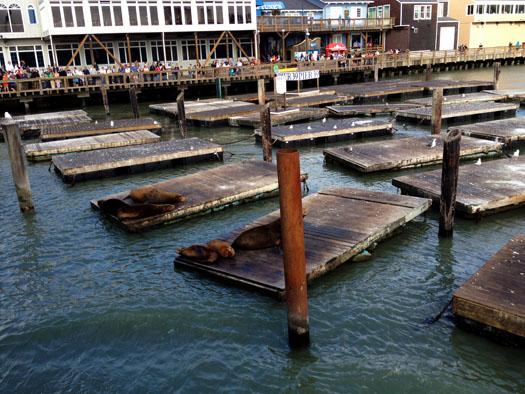 Blue & Gold Fleet Cruise ship departs near the sea lions