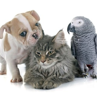 Dog, Cat, and Bird...An Allegory: Kevin H 15