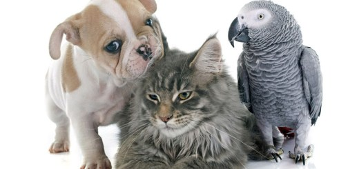 Dog, Cat, and Bird...An Allegory: Kevin H 4