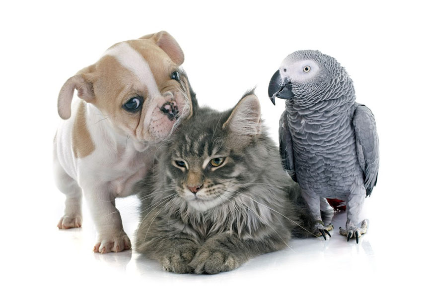 Dog, Cat, and Bird...An Allegory: Kevin H 3