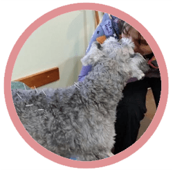 Phoenix Rising Veterinary Care, Acupuncture