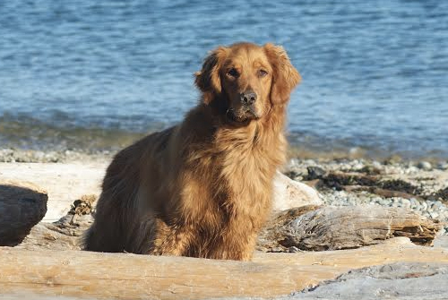 Phoenix Riising Veterinary Care, Sonny