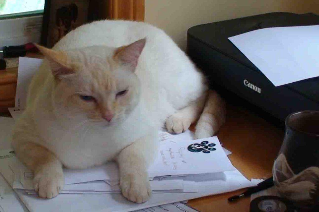 Phoenix Riising Veterinary Care,, Pet Insurance