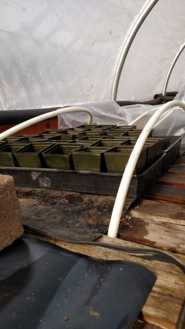 Our makeshift greenhouse within a greenhouse to keep the seed babies warm.