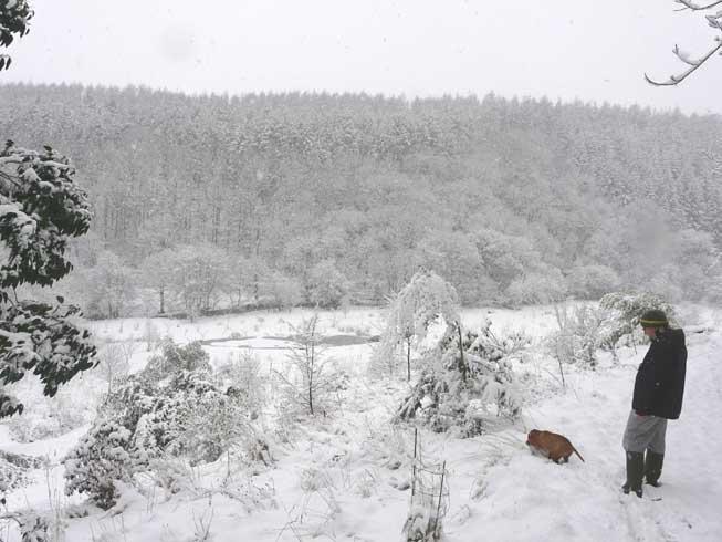 Into the Garden under Snow.
