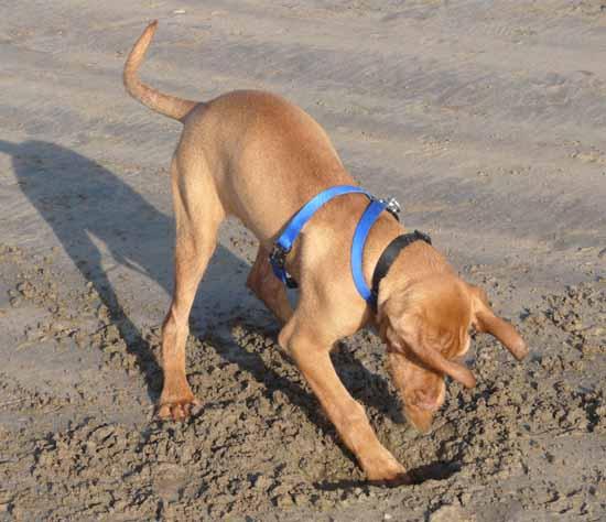 Digging at the Beach.