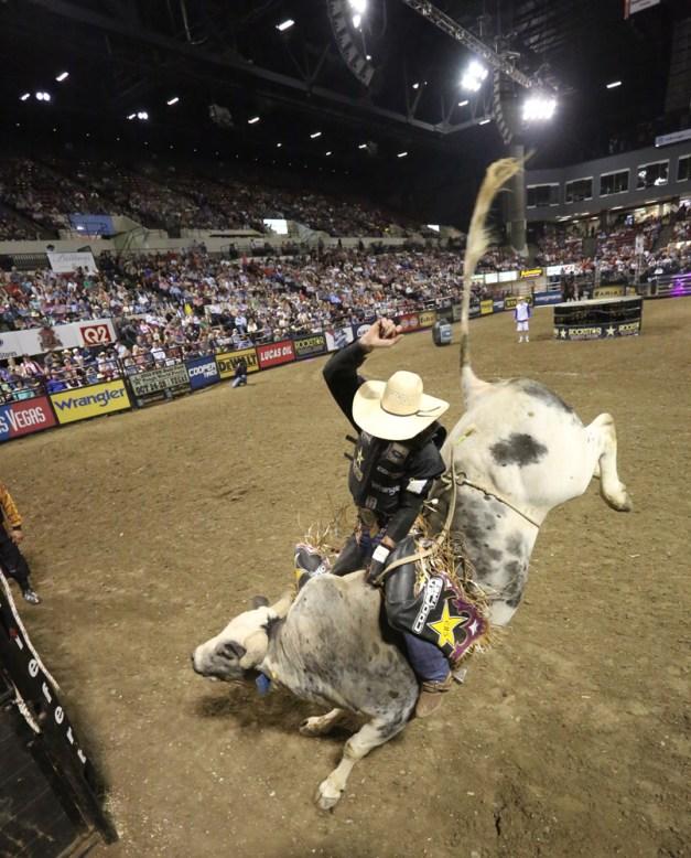 professional bull riders association   Pholloyo