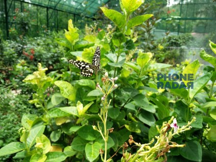 OnePlus2 Butterfly Photo Capture