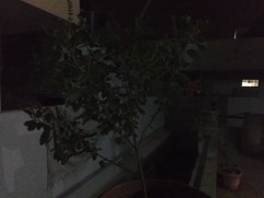 Acer Liquid Z530 - Low Light without Flash